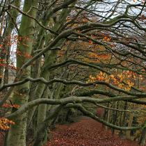 Autumn Scene at Painswick Beacon