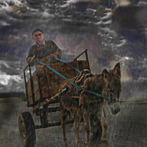 Donkey driven card in the rain