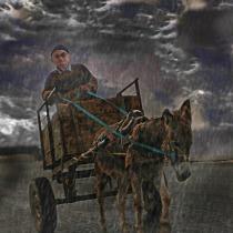 Donkey driven card in the rain