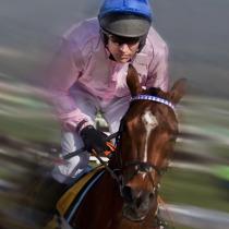 Jockey at Cheltenham Races