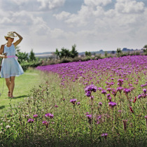 Lady walking past wild flowers