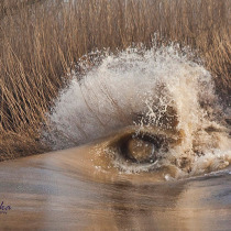 Eye of the Severn Bore